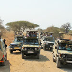Traffic jam in the Tanzanian bush: the lion spotted in the distance was a great attraction.