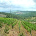 Rebberg vom Weingut Riecine