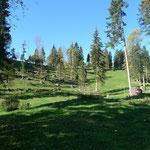 Waldpartie kurz vor Jeanguisboden
