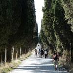 3 km lange Allee als Zufahrt von Pischiello