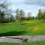 Lerchenwiesen auf dem Tschöggelberg