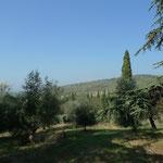 Landschaft mit Olivenbäumen