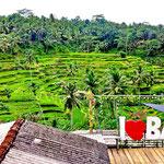 Tegelalang Reisterrassen Bali
