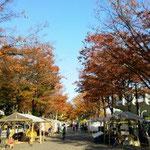 さわやかな秋晴れ!
