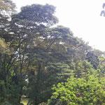 オマケ…何の木でしょうね~
