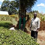 茶畑の中の大きな木とムルンギ氏