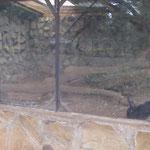 ニシキヘビと黒いウサギ