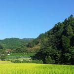 大阪のイベント会場へ行く道のりはのどかな田園、新米のシーズンですね~♪