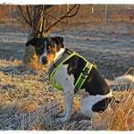... ein geprügelter Hund sieht nicht anders aus - dabei will Frauchen nur ein Foto