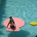 ペンギンのショウ