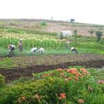 「工房あおぞら」の畑。白沢町古語父にあります。