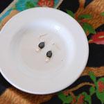 作家:yohaku 品名:pierce「cinematic」(イヤリング変更可、ただし、デザイン・素材違い(真鍮にゴールドメッキ)になります。) サイズ:モチーフ長さ約1.3cm 価格:4,860円(税込) 送料:一律500円(クロネコヤマトコンパクト利用) 素材:ピアス金具(14KGF→金属アレルギーの方ご注意)、ブラックスピネル、淡水パール、ヴェルメイユ