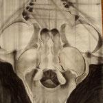 Crâne de chat 3