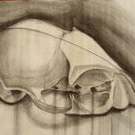 Crâne de chat 2