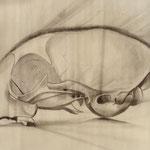 Crâne de chat4