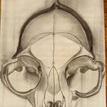 crâne de chat 1