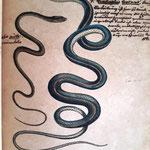 Gravures de l'Histoire Naturelle de Buffon