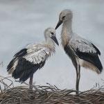 Jonge ooievaars op nest - pastelpotlood op pastelmat - 30x40cm - niet te koop