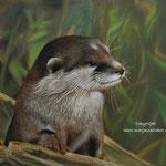 Otter - pastelpotlood op pastelmat - 30x40cm - te koop