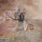 Hond en uil - pastelpotlood op pastelmat - 30x24cm - te koop