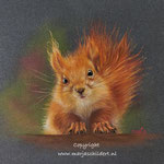 Eekhoorn - pastelpotlood op pastelmat - 30x40cm - te koop