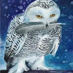 sneeuwuil - acrylverf op 3D-canvas - 30x40cm - te koop