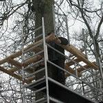 Baumplattform