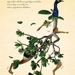 「植物と動物を組み合わせた、不思議な生き物図鑑」005:シュンソクカンソウ 長い足を生かし、ものすごい速さで走る。 いろいろな場所に住処があり、そこを目指しいつも走っている。
