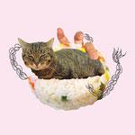どこででもくつろぐねこ「rice」