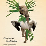 「植物と動物を組み合わせた、不思議な生き物図鑑」 002:オモイケドトンデミタイ 体重が100kg近くあるが、空を飛びたくて耳にある羽まで使って、いつも羽ばたく練習をしている。