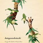 「植物と動物を組み合わせた、不思議な生き物図鑑」006:フタゴノコタチ 必ず1人2組で行動している。 特別に何かをするわけではなく、ただただひっそりと穏やかに佇んでいる。
