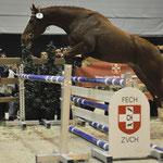 Heute werden die Pferde der Marstall Kloster Einsiedeln GmbH beim Zuchtverband CH-Sportpferde eingetragen. Ziel ist ein sehr zuverlässiges, vielseitig einsetzbares Freizeit- und Sportpferd. Foto: Joseph Carlucci