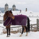 Die Ausstrahlung des Klosters gibt den Einsiedler Pferden ein einzigartiges Charisma - und es scheint, als ob auch das Kloster dank den Pferden einen aussergewöhnlichen Glanz verspürt. Foto: Katja Stuppia