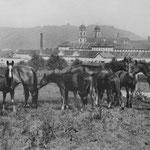 Auf der Fohlen- und Stutenweide des Klosters Einsiedeln ist links vorne das Fohlen Nella, geboren 1916, zu sehen. Es wuchs zu einer vorzüglichen Zuchtstute und Mutter von Sella heran, die dieser Stutenlinie den Namen gab. Foto: KAE F3.0/0545.0001