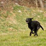 Sage on the run