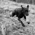 Sage (8.5 Monate) - Sprunghund
