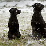 Sage und Ivy - first snow