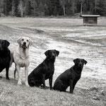 Molly (Halbschwester von Sage), Shady, Sage und Ivy beim Training Anfang Mai
