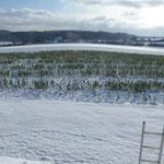 Winter Auf der Spek,Blick vom Dach ©M.Waubke