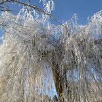 winter, reif Auf der Spek, waubke, heusinger