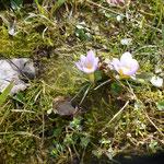 Blumen Auf der Spek,© M. Waubke