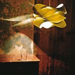 """Licht-Freude"", Laura Amberger"