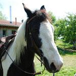 Petra Schulz, Ponyreiten, © Foto v.S.Fesl