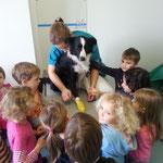 Ayk wurde von allen Kindern eingehend untersucht und bekam einen schönen Pfotenverband angelegt!