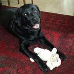 20.04.2014 - Lucky bekam eine neue Lola zu Ostern ;-)