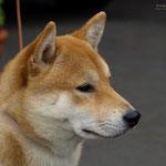 Hachiko 9 Monate