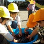 湘南まるめろ保育園の3歳児さんが「たらい」でお芋を洗っていると1歳児さんも飛び入り参加☆