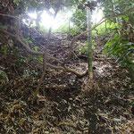 こちらの斜面も子どもたちは大好きです。木の枝や根っこを上手に掴んで登ったり降りたり。
