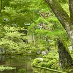 池の向こうに見えるのが、茶室「環翠菴」