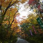 「紅葉」2013/11/24赤山禅院